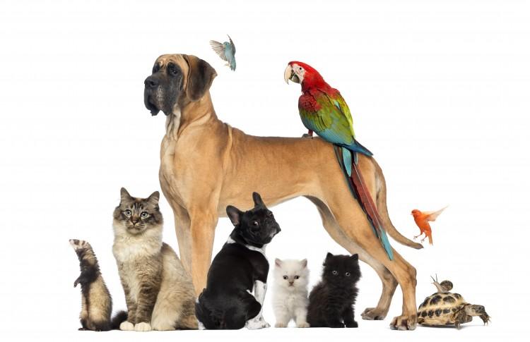 ahorro-gastos-veterinarios